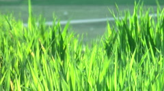 Mixed nature Stock Footage