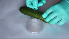 Stock Video Footage of Scientist takes a microbiological sample cucumber test e coli microbe infection