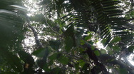 Raindrops falling from the rainforest canopy Stock Footage