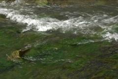 Rapid Carpathian river - stock footage