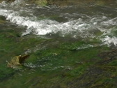 Stock Video Footage of Rapid Carpathian river