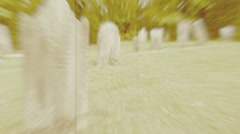Headstones in a Massachusetts graveyard, sepia, flickering film Stock Footage