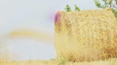 Haystacks and flower Stock Footage