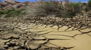 Desert stream drying up dolly shot Stock Footage