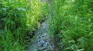 Stock Video Footage of Small and fast creek in wood