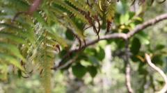 Hawaii Jungle Rack Focus Leaves Stock Footage