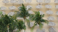 Stock Video Footage of Palms With Huts