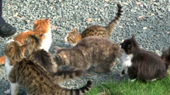 Flock of cats Stock Footage