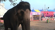Stock Video Footage of Circus elephant