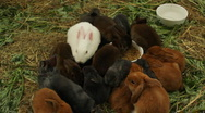 Many different and cute rabbits Stock Footage