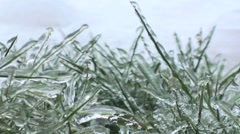 Icy grass Stock Footage
