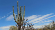 Stock Video Footage of Arizona Saguaro Slow Time Lapse