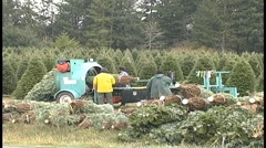 Christmas trees being bundled Stock Footage