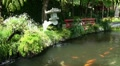 Koi Pond with Seesaw 20110422 154559 HD Footage