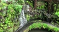 Tropical Garden 20110422 165537 HD Footage
