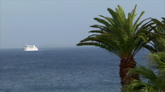 Palm with boat in background Stock Footage