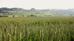 Wheat field with camera motion - stock footage