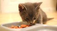 Stock Video Footage of Kitten eating - shallow depth of field.