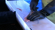 Fish cleaning Stock Footage