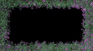 Stock Video Footage of Frame of moving foliage and purple flowers