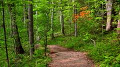 Spring time mountain path Stock Footage