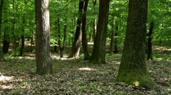 Green forest Stock Footage
