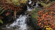 Stock Video Footage of autumnal forest brook