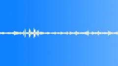Tropical bird ambience 02 loop Sound Effect