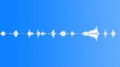 pig vocalizing many 03 - sound effect