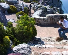 Tourists with Dassie 04, Cape Town GFSD Stock Footage