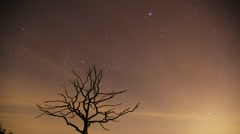 Timelapse of a dead tree at night with moving stars and clouds Stock Footage