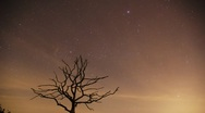 Stock Video Footage of Timelapse of a dead tree at night with moving stars and clouds