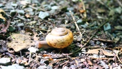 snail in motion - stock footage