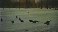 1930's - pheasants in park  - niagara Stock Footage