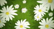 Stock Video Footage of Summer Daisies Loop HD