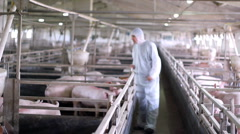 Modern Pig Farm - Veterinarian At Work - stock footage