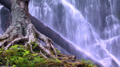Close up of waterfall and tree root Stock Footage