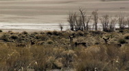 Stock Video Footage of Deer, Sand Dunes
