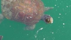 Turtles Pond 5 Stock Footage