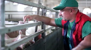 Stock Video Footage of Pig Farming