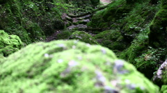 Moss Stone and green valley Stock Footage