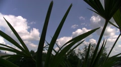 Sky through the palm Stock Footage