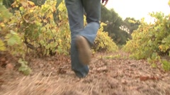 Woman walking in vineyard alley at fall, provence, france Stock Footage
