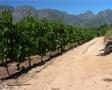Vineyard, Cape Town GFSD Footage