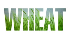 Wheat text write Stock Footage