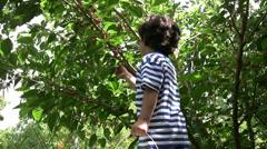 Little Boy picking cherry - stock footage