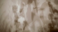 Plant wall shadow close Stock Footage