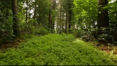 Forest Walk Stock Footage