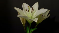 White lily decay 10 seconds time remap 3 Stock Footage