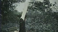 1930's - Downed Tree - Niagara falls Stock Footage